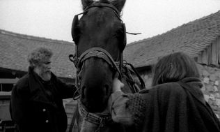 the turin horse2